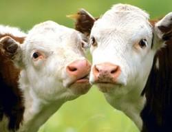 Определиха новите субсидии за животновъдите