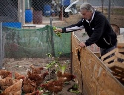 БАБХ: Отглеждането на животни в задния двор за лични нужди няма да се криминализира